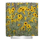 Sunflower Patch On The Hill Shower Curtain by Tom Janca
