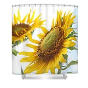 Sunflower Perspective Shower Curtain by Kerri Mortenson