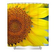 Sunflower Petals Shower Curtain
