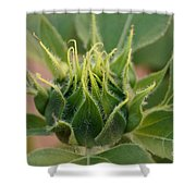 Sunflower Pod Shower Curtain