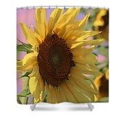 Sunflower Pop Shower Curtain