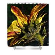 Sunflower Profile Shower Curtain