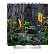 Sunflower Quartet Shower Curtain