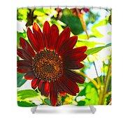 Sunflower - Red Blazer - Luther Fine  Art Shower Curtain