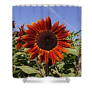 Sunflower Sky Shower Curtain by Kerri Mortenson