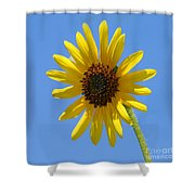 Sunflower Square Shower Curtain