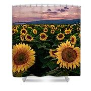 Sunflower Sunset II Shower Curtain