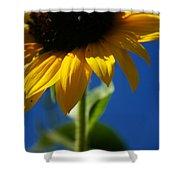 Sunflower Three Shower Curtain