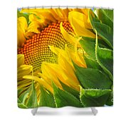 Sunflower Unfolding  Shower Curtain