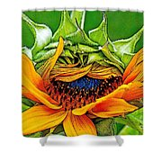 Sunflower Volunteer Half Bloom Shower Curtain