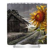 Sunflower Watch Shower Curtain by Debra and Dave Vanderlaan