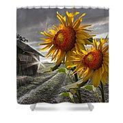 Sunflower Watch Shower Curtain