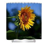 Sunflower With Honeybee Shower Curtain