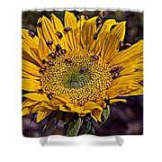Sunflower With Ladybugs Shower Curtain