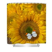 Sunflower With White Butterfly Shower Curtain