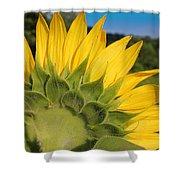 Sunflower1253 Shower Curtain