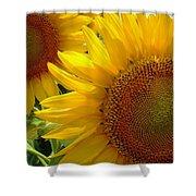 Sunflowers #1 Shower Curtain