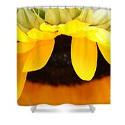 Sunflowers 3 Shower Curtain