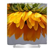 Sunflowers 6 Shower Curtain