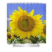 Sunflowers And Blue Sky Shower Curtain