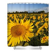 Sunflowers At Dawn Shower Curtain