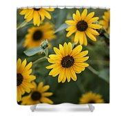 Sunflowers Bloom Shower Curtain