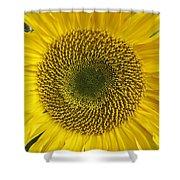 Sunflower's Cluster Shower Curtain