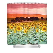 Sunflowers, Corbada, Spain Shower Curtain