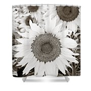 Sunflowers In Back And White Shower Curtain