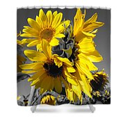 Yellow Selected Sunflowers Shower Curtain