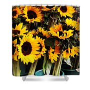 Sunflowers In Blue Bowls Shower Curtain