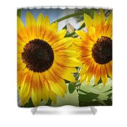 Sunflowers In Full Bloom Shower Curtain
