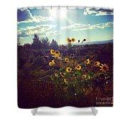 Sunflowers In Sun Light Shower Curtain