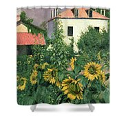 Sunflowers In The Garden At Petit Gennevilliers  Shower Curtain