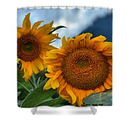 Sunflowers In The Wind Shower Curtain
