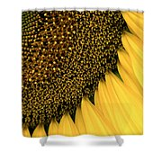 Sunflowers Of Summer Shower Curtain