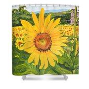 Sunflowers - Red Barn - Pennsylvania Shower Curtain