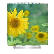 Sunflowers Vintage Dreams Shower Curtain