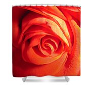 Sunkissed Orange Rose 11 Shower Curtain