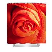 Sunkissed Orange Rose 11 Shower Curtain