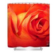 Sunkissed Orange Rose 6 Shower Curtain