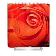 Sunkissed Orange Rose 9 Shower Curtain