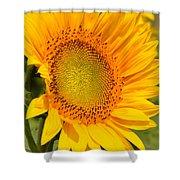 Sunkissed Sunflower Shower Curtain