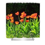 Sunkissed Tulip Garden Shower Curtain