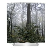 Sunlight And Fog Shower Curtain