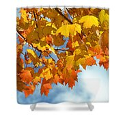 Sunlight And Shadow - Autumn Leaves Two Shower Curtain