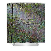 Sunlight Highlights In Armstrong Redwoods State Preserve Near Guerneville-ca Shower Curtain