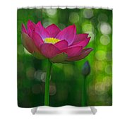 Sunlight On Lotus Flower Shower Curtain