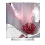 Sunlight On Magnolia Blossom Shower Curtain