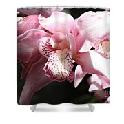Sunlight On Pink Orchid Shower Curtain